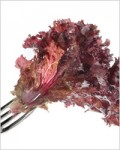 Mixed Raw Food Diet